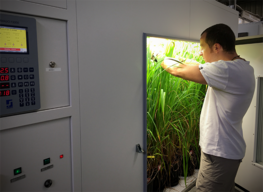 Denis Fabre inspects rice growing in a climate chamber © Denis Fabre - CIRAD