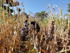 The social relations between farmers play a major role in sorghum diversity © Vanesse Labeyrie